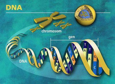 800px-DNA_molekula_života_-_česky