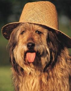 Hund-hut