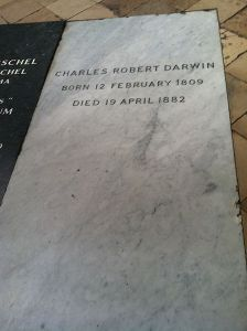 448px-Charles_Darwin's_grave_at_Westminster_Abbey