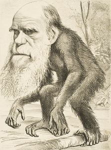 Editorial_cartoon_depicting_Charles_Darwin_as_an_ape_(1871)-1