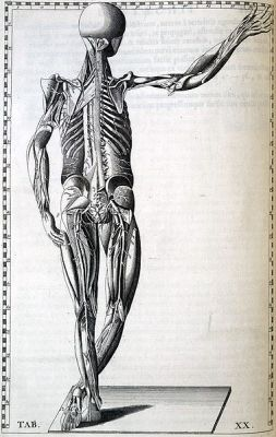 379px-Eustachi_nervous_system