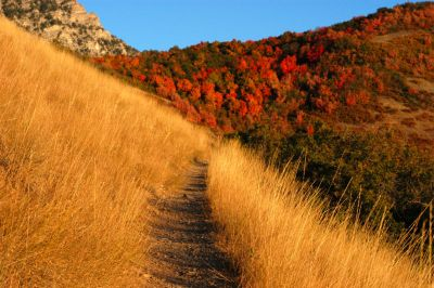 800px-Autumn_mountain_trail